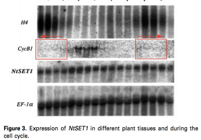 Did Plant Cell learn from Voinnet Affair? – For Better Science